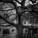 Burghley House & Garden