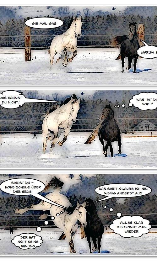 Situationen in einem Pferdeleben – Teil 1