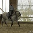 Barockes Reiten mit Richard Hinrichs - März 2013