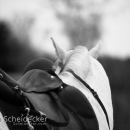 Barockes Reiten mit Richard Hinrichs - April 2017