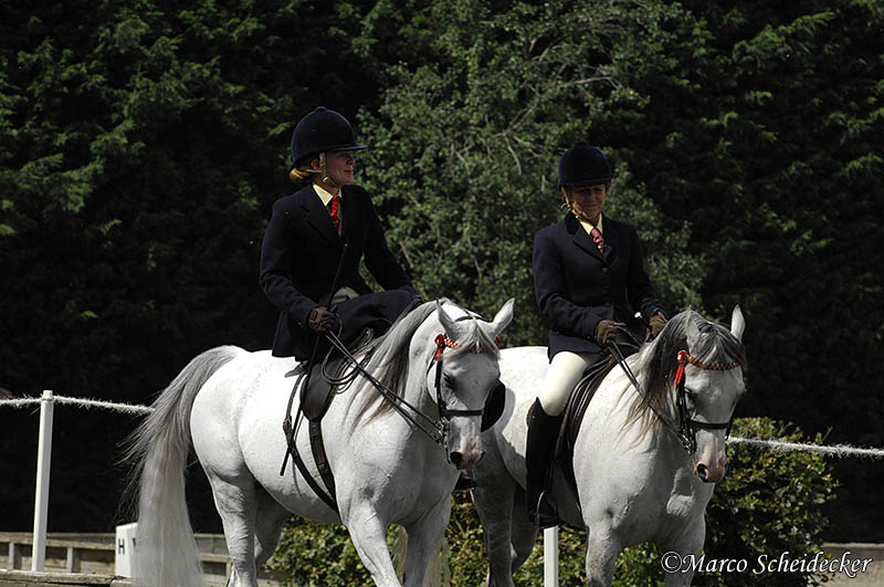2010 The National Side Saddle Show Marco Scheidecker