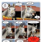 Situationen in einem Pferdeleben – Ronja voll motiviert