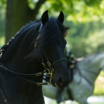 Herrenhäuser Gärten - Feuerwerk der Pferde 2013