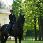 Herrenhäuser Gärten - Feuerwerk der Pferde 2013 - Stierbild +