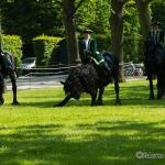 Herrenhäuser Gärten - Feuerwerk der Pferde 2013 - Friesenbild