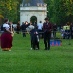 Herrenhäuser Gärten - Feuerwerk der Pferde 2013 - Ponybild Lan
