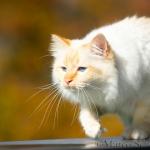 Anika's Katze