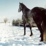 Ronja 2003