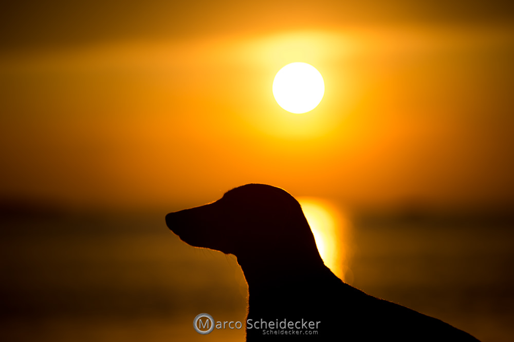 Herr Anders am Bodensee
