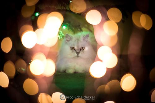 Kisha und ihr Weihnachtsbaum